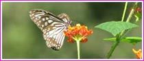 Butterfly Tour in India