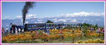 Darjeeling Tour