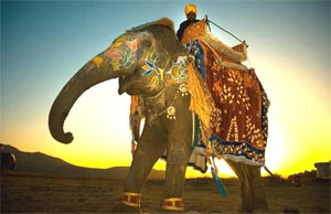 Special Interest Tours In India