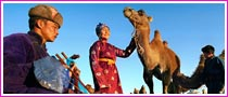 Camel Safari Tours In Mongolian