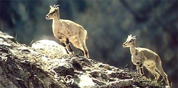 Wild Animals Hunting Tour in Nepal