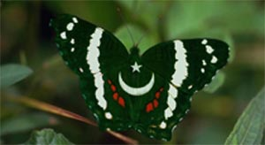 Butterfly Tour in Pakistan