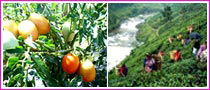 Agro Tourism In Sri Lanka