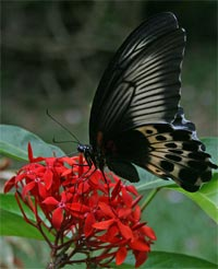 Butterflies Tour In Sri Lanka
