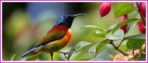 Birdwatching Tour In Thailand