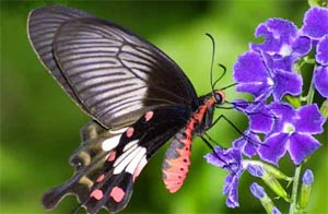 Butterfly Tour In Thailand
